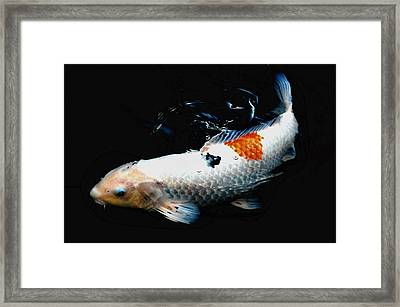 Koi Rising Framed Print by Don Mann