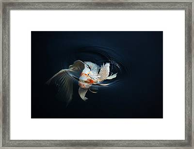 Koi Rising In The Moonlight Framed Print by Don Mann