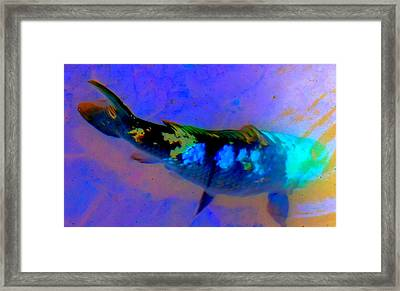 Koi Story One A Framed Print by Randall Weidner