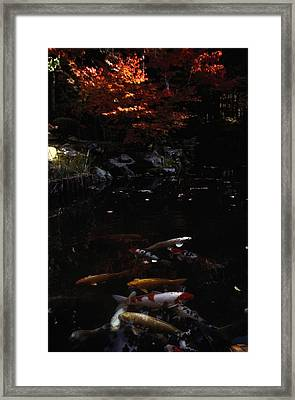 Koi Swim In A Pool Located Framed Print by Sam Abell