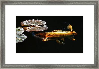 Koi Under Lillies Framed Print