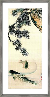 Koi Under Pine Branch 1900 Framed Print by Padre Art