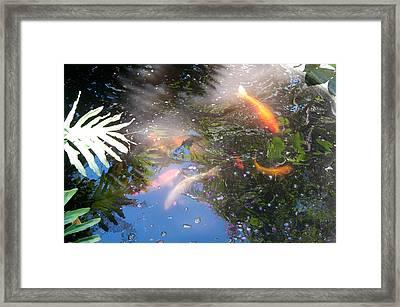 Kois In Motion Framed Print by Herman Boodoo