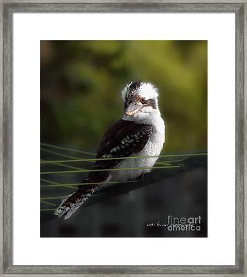 Framed Print featuring the photograph Kookaburra Hoists On The Hills by Vicki Ferrari