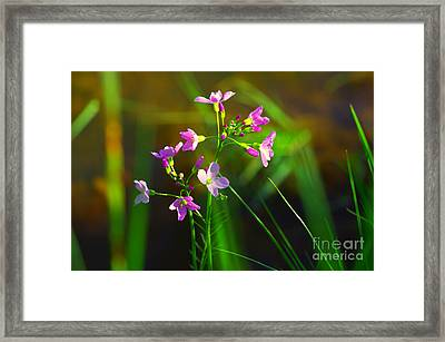 Kuckucksblume Framed Print by Tanja Riedel