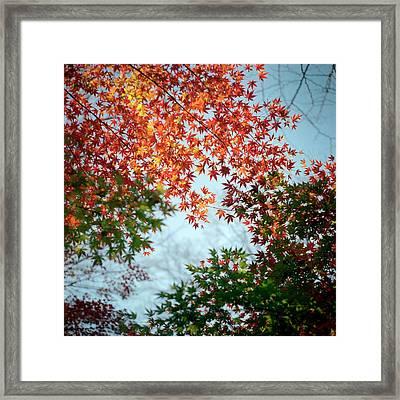 Kuhonbutsu In Autumn Framed Print by Haribote.nobody