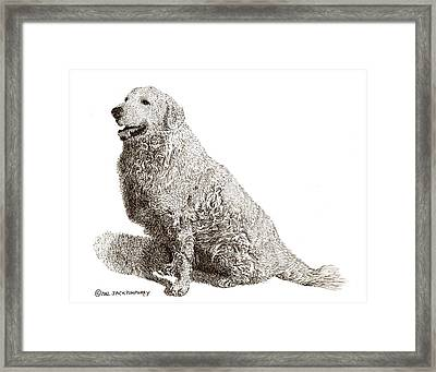 Kuvasz Named Pax Framed Print by Jack Pumphrey