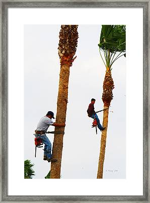 La Feria Texas Palm Tree Trimmers Framed Print