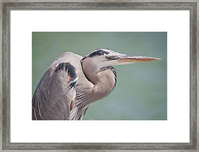 Framed Print featuring the photograph La Garza by Steven Sparks