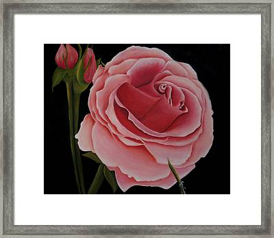 La Rosa  Framed Print by Mary Gaines