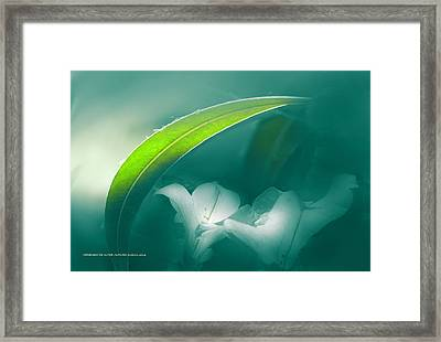 La Sombrilla Framed Print