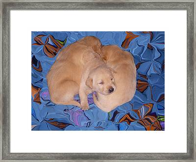 Lab Pups 2 Framed Print by Aimee L Maher Photography and Art Visit ALMGallerydotcom