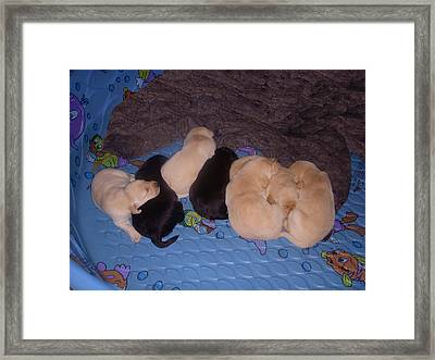 Lab Pups 3 Framed Print by Aimee L Maher Photography and Art Visit ALMGallerydotcom