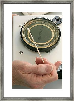 Laboratory Test On Urine Culture Framed Print by Doncaster And Bassetlaw Hospitals