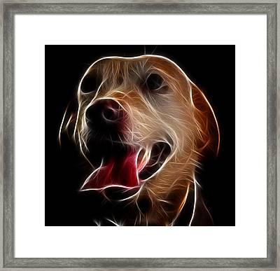 Labrador Framed Print by Abhishek Singh