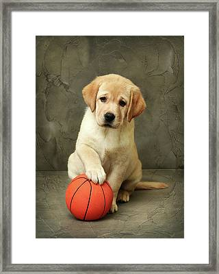 Labrador Puppy With Red Ball Framed Print