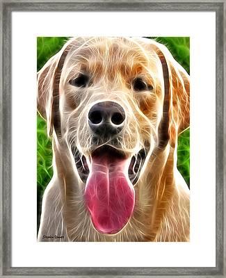 Labrador Retriever Framed Print by Stephen Younts