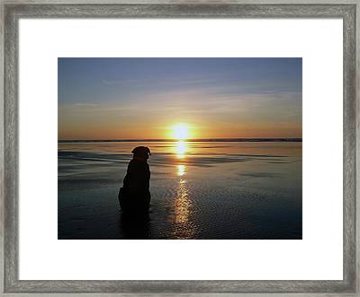 Labrador Watching The Sun Set Framed Print
