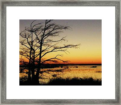 Framed Print featuring the photograph Lacassine Sunset by Lizi Beard-Ward
