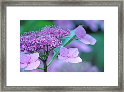 Lace Framed Print by Becky Lodes