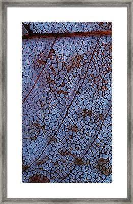 Lace Leaf 1 Framed Print