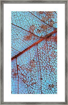 Lace Leaf 2 Framed Print