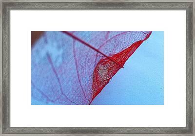 Lace Leaf 3 Framed Print