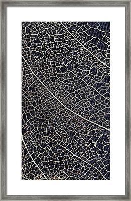 Lace Leaf 5 Framed Print