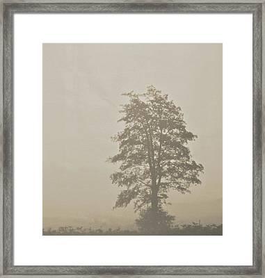 Lace Framed Print by Odd Jeppesen