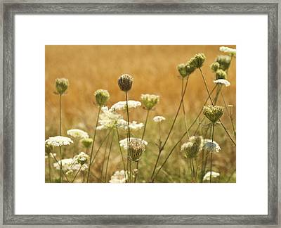 Lace Framed Print by Rebecca Cozart