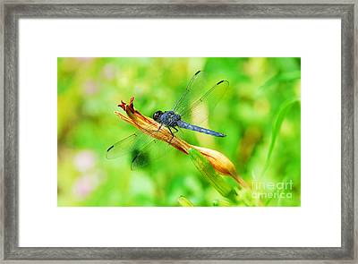 Framed Print featuring the photograph Lace Wings by Cindy Manero