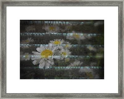 Lacey Daisy Song Framed Print