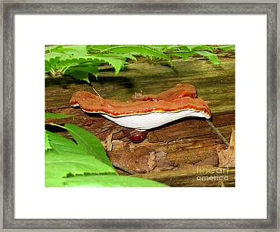 Lacquered Polypore Framed Print