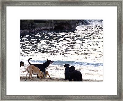 Ladridos De Mar Framed Print by Karin Cortez