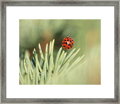 Framed Print featuring the photograph Lady Beetle On A Needle by Penny Meyers