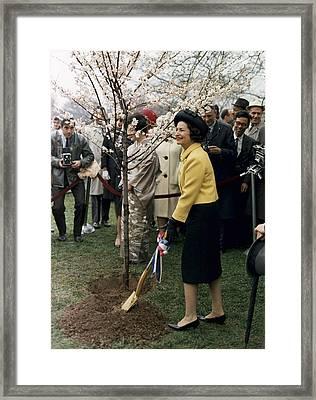 Lady Bird Johnson Planting A Tree Framed Print by Everett