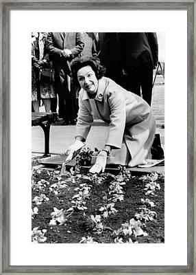 Lady Bird Johnson Planting Pansies Framed Print by Everett