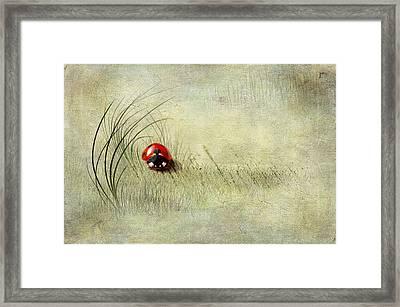 Lady Bird Framed Print by Svetlana Sewell