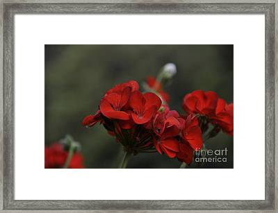 Lady In Red Framed Print by Tamera James