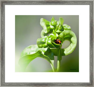 Lady Luck Framed Print by Michelle Wiarda
