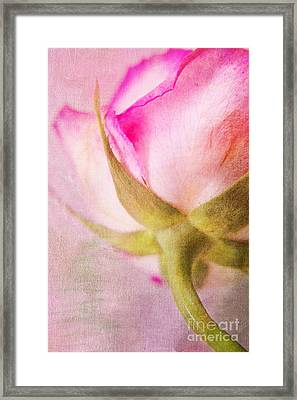 Lady Rose Framed Print by Angela Doelling AD DESIGN Photo and PhotoArt