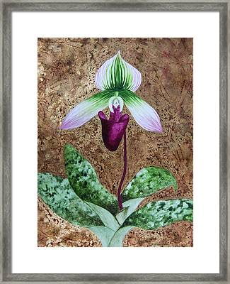 Lady Slipper Orchid With Gold Leaf Background Framed Print by Kerri Ligatich