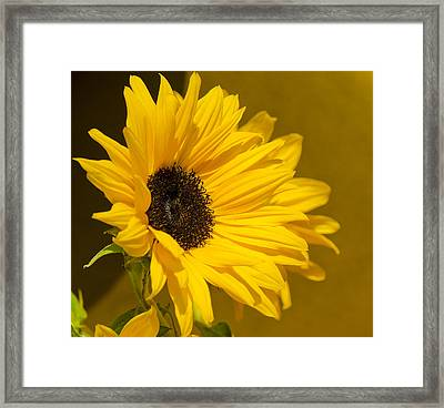 Lady Sunflower Framed Print by MaryJane Armstrong