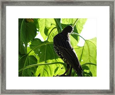 Ladybird Framed Print by Katie Bauer