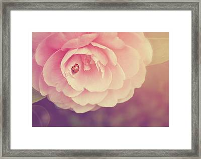 Ladybird On Camellia Framed Print