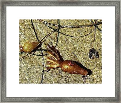 Framed Print featuring the photograph Ladybirds by Jasna Gopic
