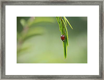 Ladybug 3 Framed Print by Pan Orsatti