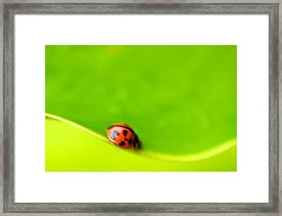 Ladybug Abstract Framed Print by Arj Munoz