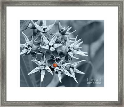 Ladybug Flower Framed Print