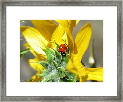 Framed Print featuring the photograph Ladybug by Mitch Shindelbower